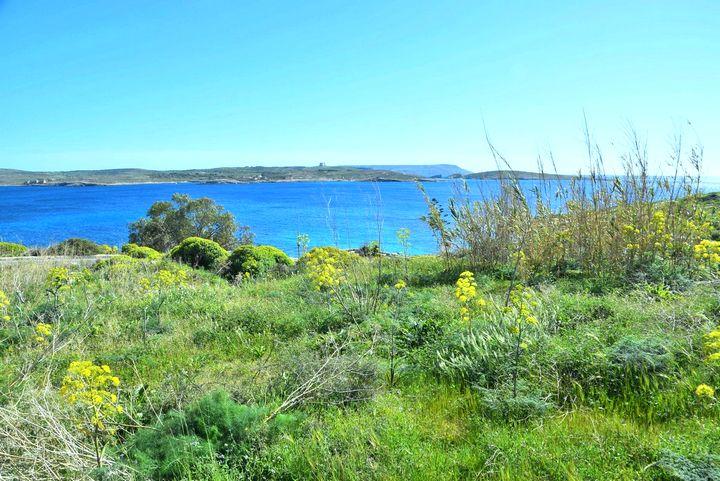 Enter the Gozo Half Marathon and be a fundraiser for BirdLife Malta