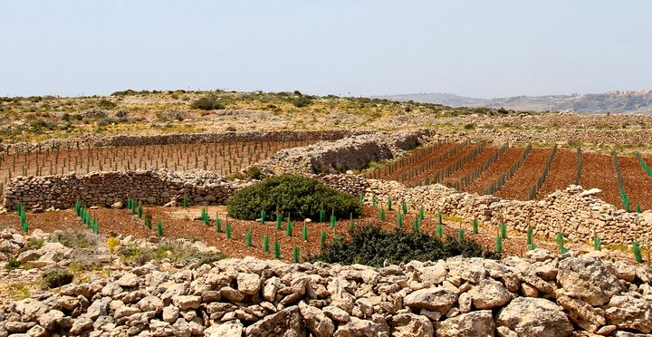 3,100 native trees planted on Comino - 280 tonnes of waste removed