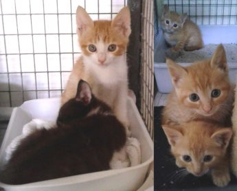 Gozo SPCA kittens all waiting for loving forever homes