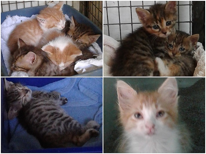 Kittens of all ages and colours in urgent need of loving homes