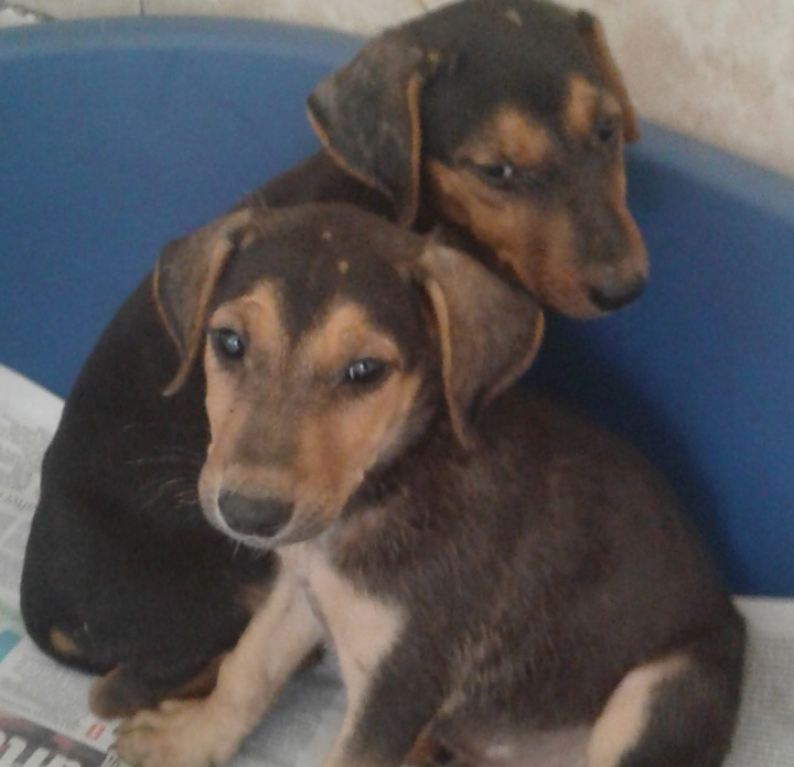 Janet and John - Two puppies in need of a loving, forever home