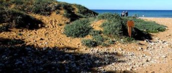 A chance to discover the rare sand dune species of Ramla Bay