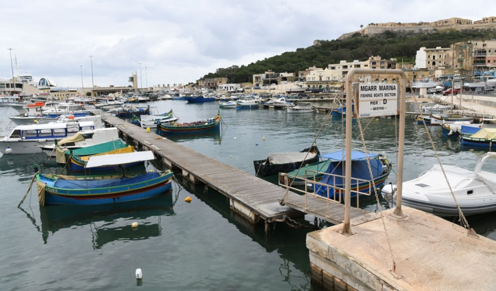 Free palm fronds for Gozitan fishermen in readiness for Lampuki season
