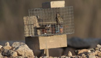 """Opening the trapping season will be """"taking trappers for a ride"""" - BLM"""