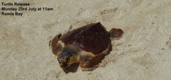 Turtle release in Ramla Bay, Gozo next Monday with NT-FEE Malta