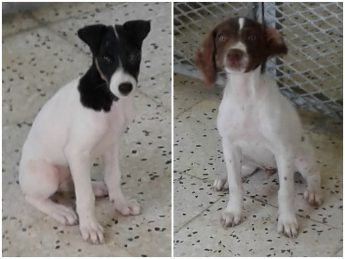 Puppies Amy and Ben are waiting for loving, forever homes