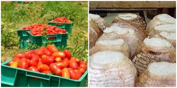 Bread and Tomato Festival with traditional local recipes and more
