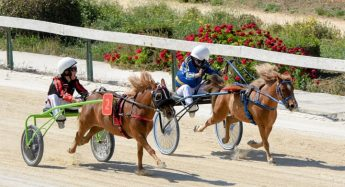 New horse racing season gets underway in Gozo this Saturday