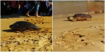 Plastic Litter Campaign launch with the release of three turtles