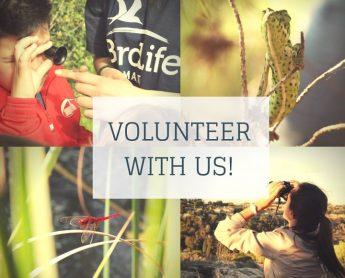 BirdLife Malta issues call for call for Erasmus+ Volunteering interns