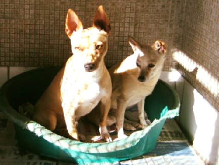 Choose the ideal Christmas present with a Gozo SPCA sponsorship