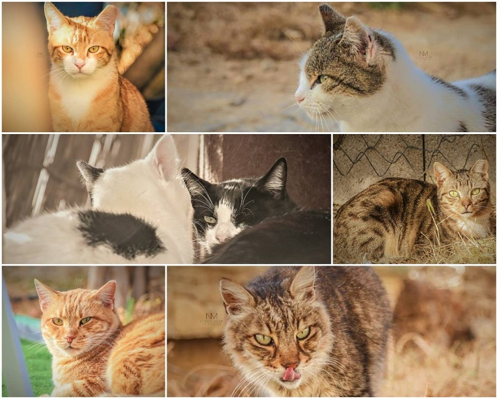 Gozo SPCA colony: Beautiful, loving cats in need of forever homes