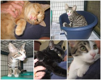 Please consider offering one of these kittens a loving, forever home