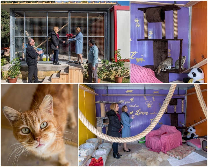 Happy cats and kittens as new facilities open at Animal Welfare Gozo