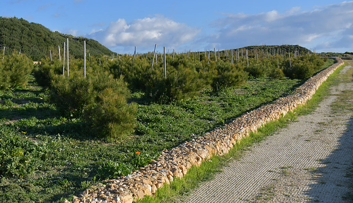 Applications for Gozo Ministry's Adopt a Tree close next Sunday