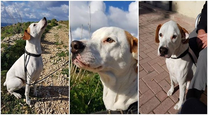 Can you offer Ricky the chance of a loving, forever home?