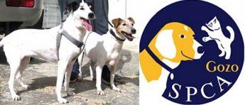 Toyah and Elsa - Two gentle Fox Terriers waiting for loving homes