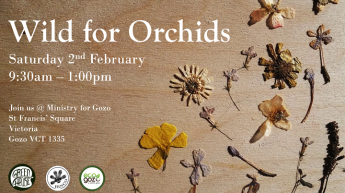 Wild for Orchids: Do you want to help save Gozo's wild orchids?