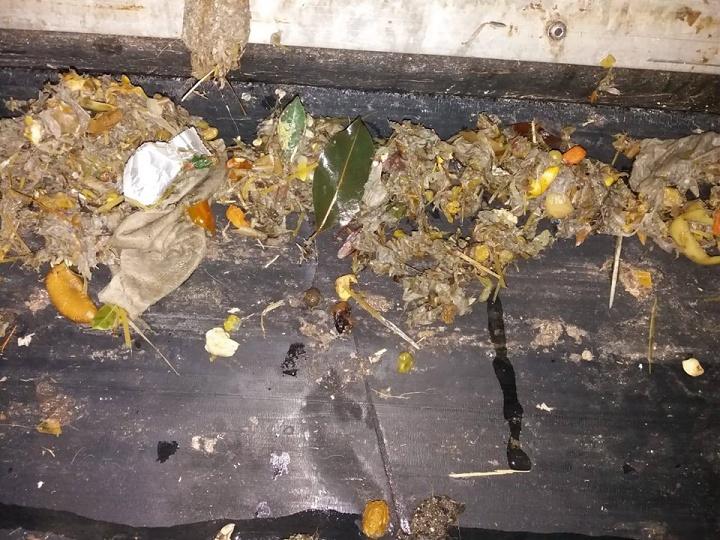 Animal waste clogs Gozo sewage plant forcing it to shut - WSC