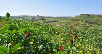 Nature Trust - FEE Malta laments the state of Maltese agriculture