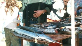 Restrictive measures adopted by MEPs to protect swordfish