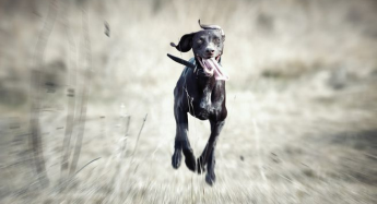 "Irresponsible dog owners ""running amok,"" say animal NGOs"