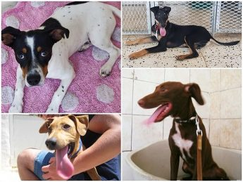 Gozo SPCA urgently needing homes for puppies and dogs