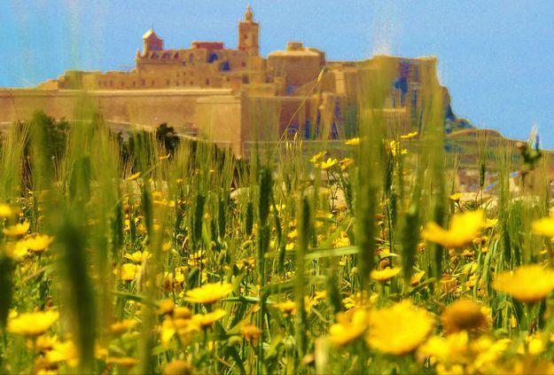 Gozo News